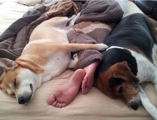 Ste eni od mnogih, ki imajo v postelji kuža, muco, hrčka?