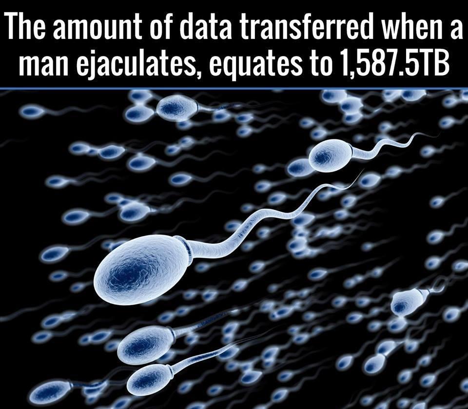 ejakuacija moske sperme