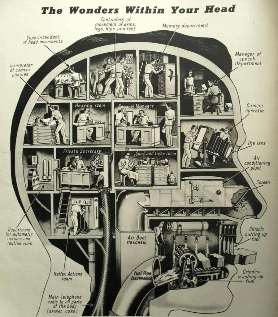 lep-prikaz-mozganov